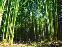 绿色城市jungle9,假竹子 图库摄影