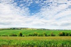 绿色域和天空 免版税库存图片
