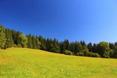 绿色域和结构树 免版税库存图片