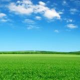 绿色域和蓝天 免版税图库摄影