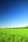 绿色域和蓝天 免版税库存照片