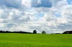 绿色域在夏天 免版税库存照片