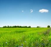 绿色域在蓝天下。 夏天横向 免版税库存图片