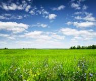 绿色域在蓝天下。 夏天横向 图库摄影
