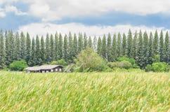 绿色域横向的之家 图库摄影