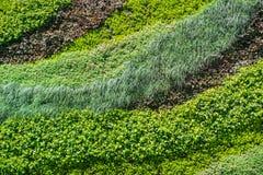绿色墙壁,有各种各样的植物的eco友好的垂直的庭院 库存照片