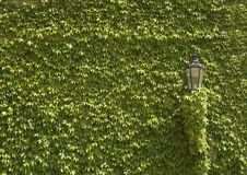 绿色墙壁 免版税库存照片
