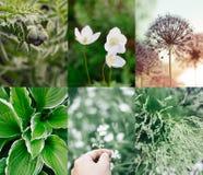 绿色夏天拼贴画植物和花 免版税库存图片