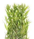 绿色夏天真正的草长的灌木 库存图片