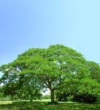 绿色夏天结构树 免版税图库摄影