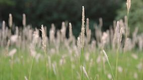 绿色夏天草和阳光 股票视频