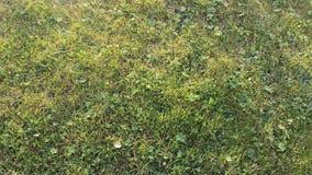 绿色夏天草坪背景充分的框架 免版税库存图片
