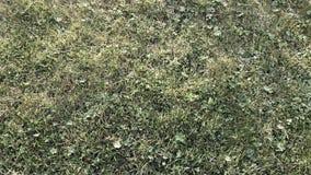 绿色夏天草坪背景充分的框架 免版税库存照片