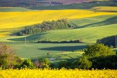 绿色夏天风景风景视图 免版税库存照片