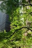 绿色多伦多 免版税库存图片