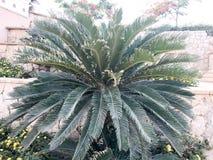 绿色大美丽的异乎寻常的详尽的蓬松热带棕榈,植物蕨对美好的自然老老被拖曳的黄色墙壁  免版税图库摄影