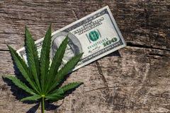 绿色大麻生叶和100在木桌上的美金 免版税库存图片