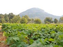 绿色完全农场土地与树 免版税库存图片