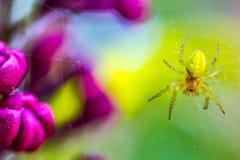 绿色宏观蜘蛛 图库摄影