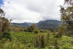 绿色密林在肯尼亚的心脏 Aberdare,非洲 免版税库存图片