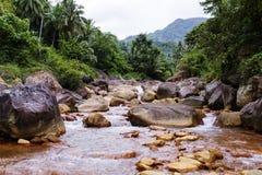 绿色密林森林夏天旅行风景的热带河在热带 免版税图库摄影