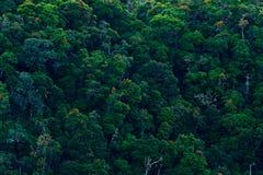 绿色密林风景在哥斯达黎加 与大美丽的树的森林小山在南美 鸟的监视人在森林Tropi里的山 库存图片