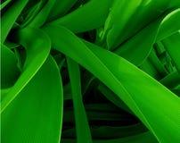 绿色密林 免版税库存图片