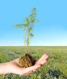 绿色寿命 免版税库存照片