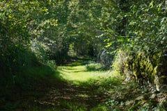 绿色小径和茂盛植物法国人乡下 库存图片