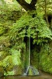 绿色小的瀑布 免版税库存照片