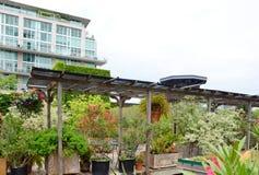 绿色屋顶 库存照片