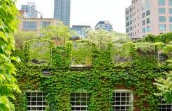 绿色屋顶 图库摄影