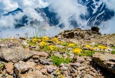 绿色山森林和树生长在岩石的,自然风景透视,高加索,俄罗斯惊人的自然视图  免版税库存照片