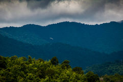 绿色山森林在泰国 库存图片