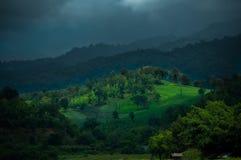 绿色山森林 免版税库存图片
