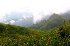 绿色山谷和雾在森林里 免版税库存图片