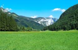 绿色山谷 库存照片