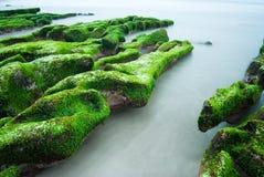 绿色岩石海滨 免版税图库摄影