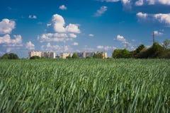 绿色年轻麦子的领域反对一个大城市大厦的背景的 提供人的概念以食物 库存图片