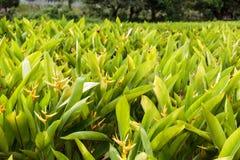 绿色庭院在与新鲜的明亮的植物的夏天在一个晴天 库存图片