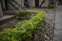 绿色庭院pov 库存图片