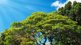 绿色异乎寻常的树在一个晴天 库存照片