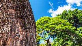 绿色异乎寻常的树纹理在一个晴天 免版税库存照片