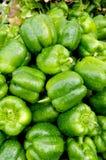 绿色弄湿 库存图片