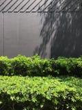 绿色当墙壁盖子使用的灌木和木盘区 库存照片