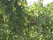 绿色当墙壁盖子使用的灌木和木盘区 免版税图库摄影