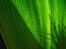 绿色影子 免版税库存照片