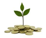 绿色投资 免版税库存图片