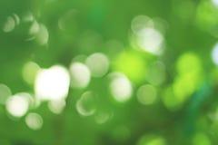 绿色抽象背景,自然bokeh在葡萄园里 库存照片