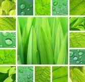 绿色拼贴画 库存照片